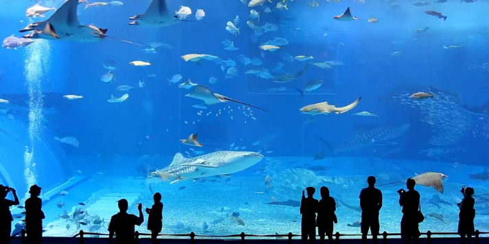 Viện Hải Dương học - Du lịch biển Nha trang