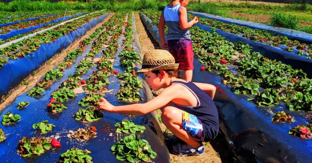 Du lịch nông nghiệp là gì?